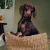 Zara створили колекцію одягу й аксесуарів для тварин