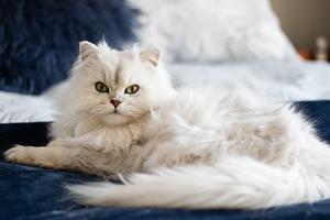 Як домашні коти ставляться до своїх господарів – дослідження
