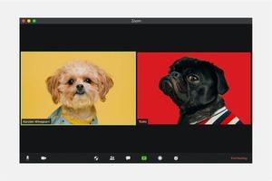 Є питання. Zoom, Skype й інші месенджери: як увічливо повідомити, що не хочеш спілкуватися?