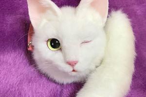На кого підписатися: Instagram японки, яка шиє реалістичні сумки у вигляді котів