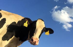 Виробництво органічного м'яса шкодить довкіллю, так само як і звичайного – дослідження