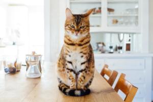 До закладок: платформа Tably, яка визначає внутрішній стан котів