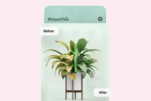 До закладок: застосунок PictureThis – Plant Identifier, який розпізнає понад мільйон рослин